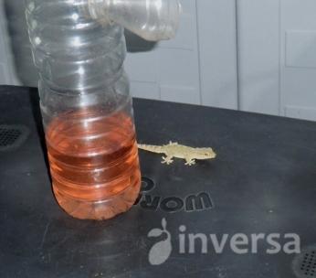 La tentación de los reptiles nocturnos
