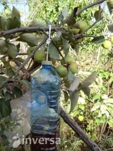 trampa del gusano de la fruta