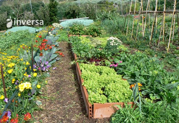 10 beneficios de la fertilizaci n org nica y el correcto for Que es la asociacion de cultivos